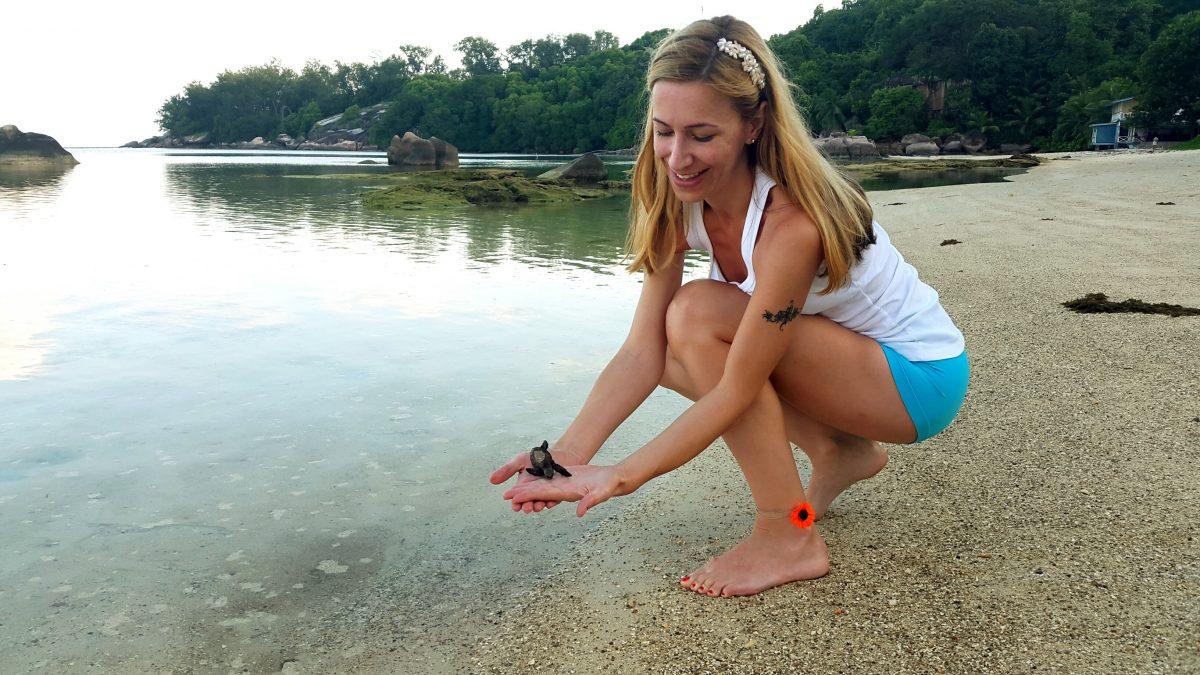 Saving baby turtle Mahe Seychelles